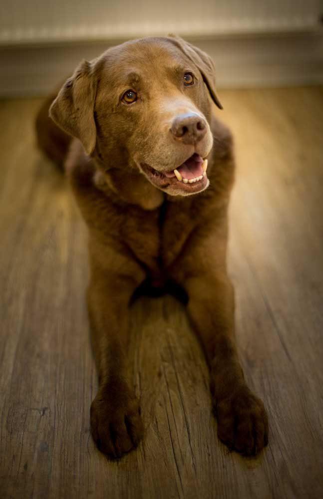 Der Hund sorgt für das ausgeglichene Betriebsklima im Steuerbüro Claudia Seiffert, Dierdorf